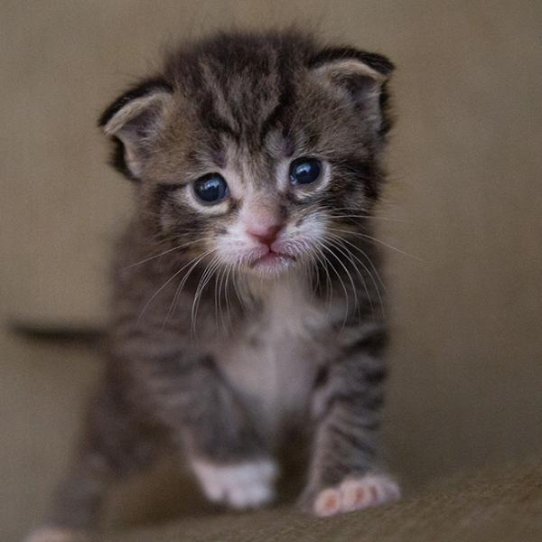 【夢占い】子猫が出てくる夢   拾う・怪我・助ける・殺す   SPITOPI