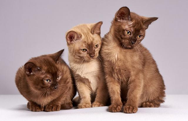 「猫を助ける」夢を見る意味とは?夢占いでの解釈   SPITOPI